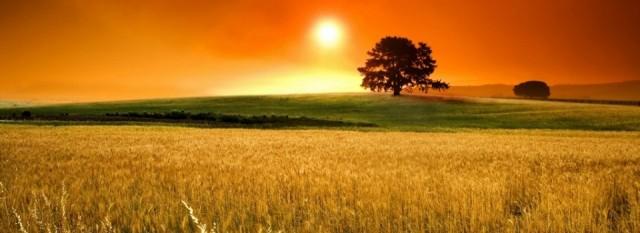 ripe_fields_harvest